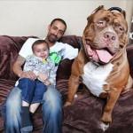 Những chú chó giá nửa triệu đôla